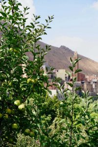 Riad-Atlas-Panorama-Imlil-easy-walking-tour-apple-tree-200x300 Imlil village